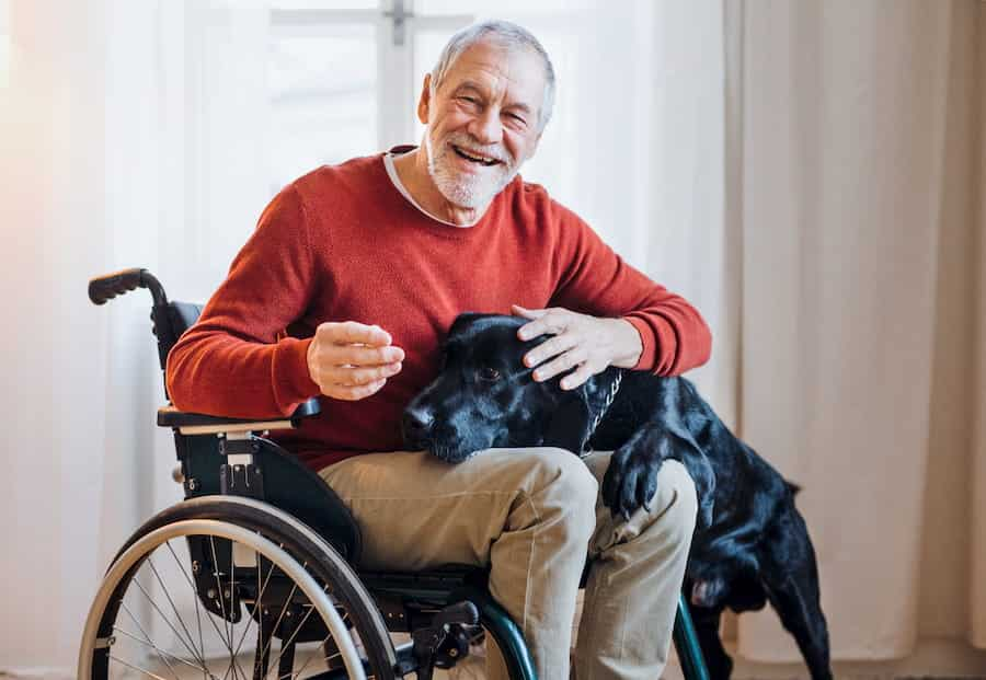 A disabled senior man in wheelchair indoors playing with a pet dog at home