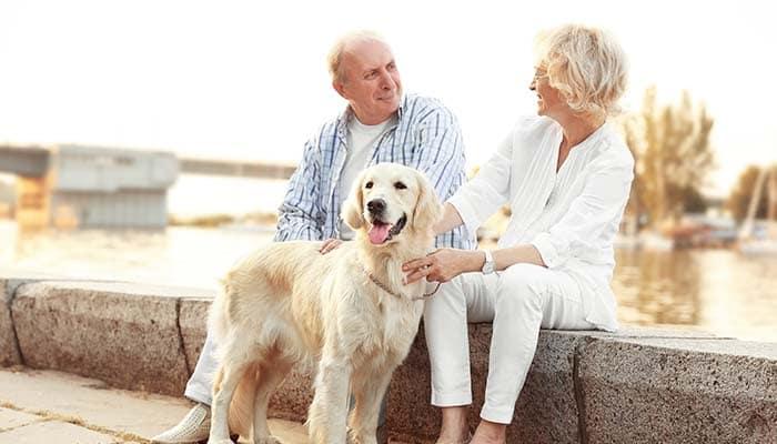 senior couple on a calm walk with their dog